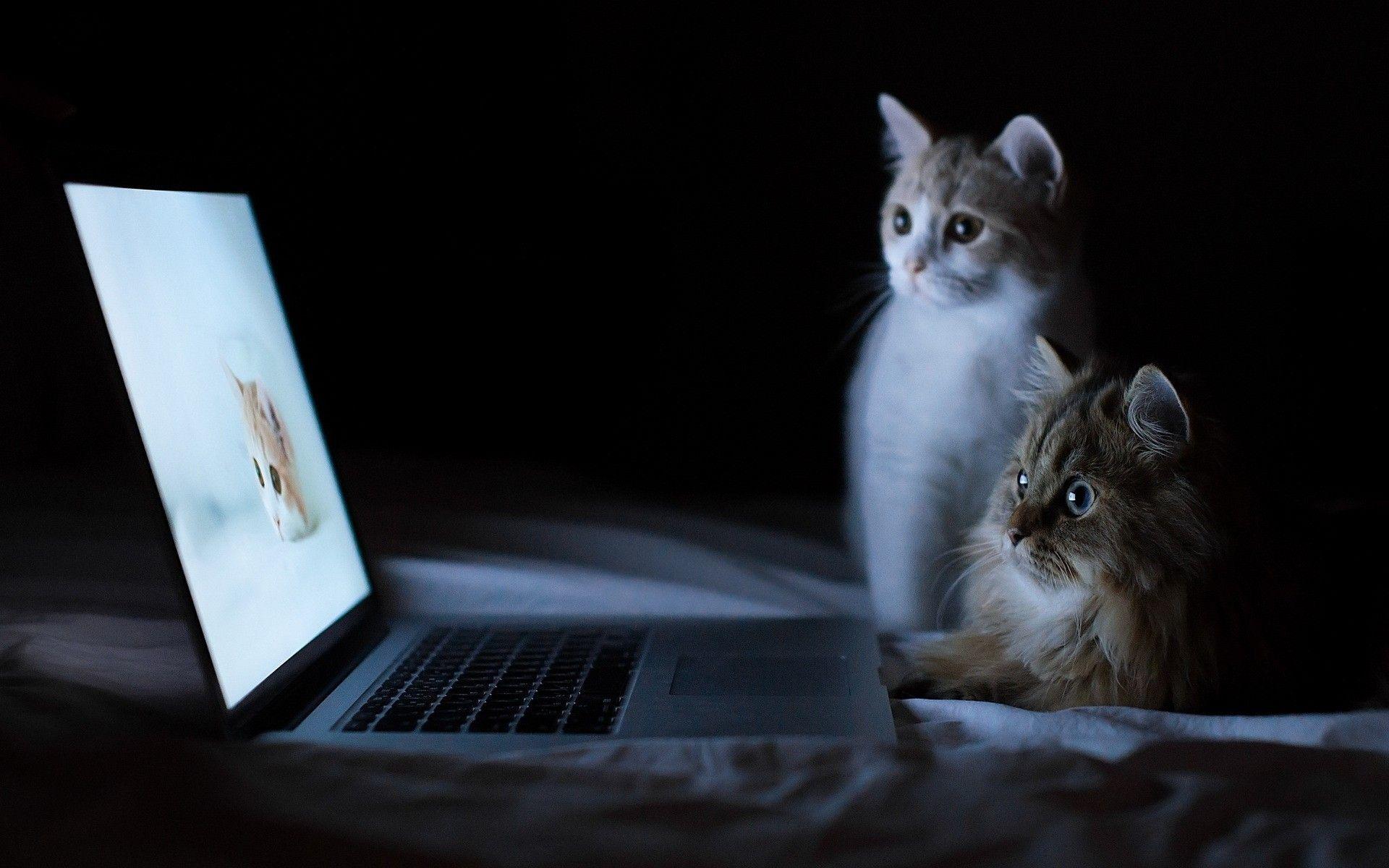 Best Laptop for CAT